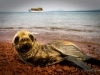 baby sea lion, Galapagos Islands